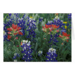 USA, Texas Hill Country. Bluebonnets and Greeting Card