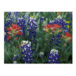 USA, Texas Hill Country. Bluebonnets and Postcard