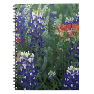 USA, Texas Hill Country. Bluebonnets and Spiral Notebook