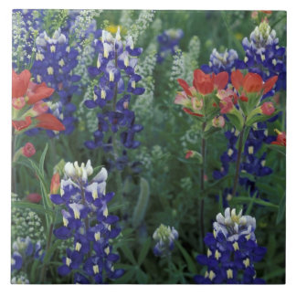 USA, Texas Hill Country. Bluebonnets and Tile
