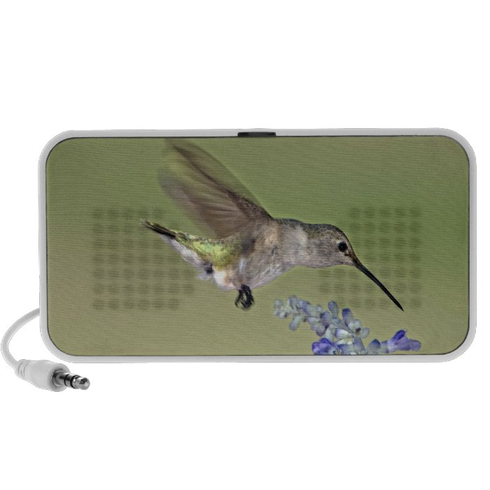 USA, Texas, Hill Country. Female black-chinned Mini Speakers