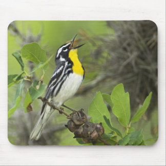 USA, Texas, Hill Country. Male yellow-throated Mouse Pad