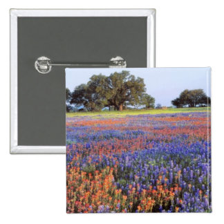 USA, Texas, Llano. Bluebonnets and redbonnets 15 Cm Square Badge