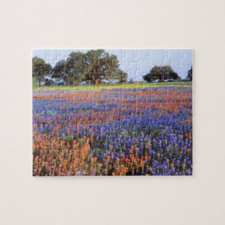 USA, Texas, Llano. Bluebonnets and redbonnets Jigsaw Puzzle