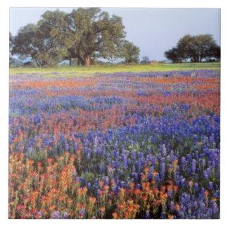 USA, Texas, Llano. Bluebonnets and redbonnets Tile