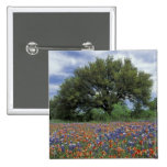 USA, Texas, Marble Falls Paintbrush and 15 Cm Square Badge