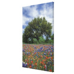 USA, Texas, Marble Falls Paintbrush and Stretched Canvas Print