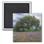 USA, Texas, Marble Falls Paintbrush and Magnets
