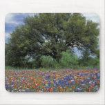 USA, Texas, Marble Falls Paintbrush and Mouse Pad