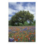 USA, Texas, Marble Falls Paintbrush and Photo Art