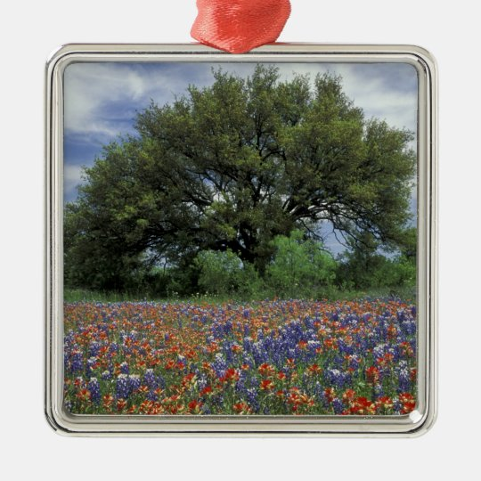 USA, Texas, Marble Falls Paintbrush and Silver-Colored Square Decoration