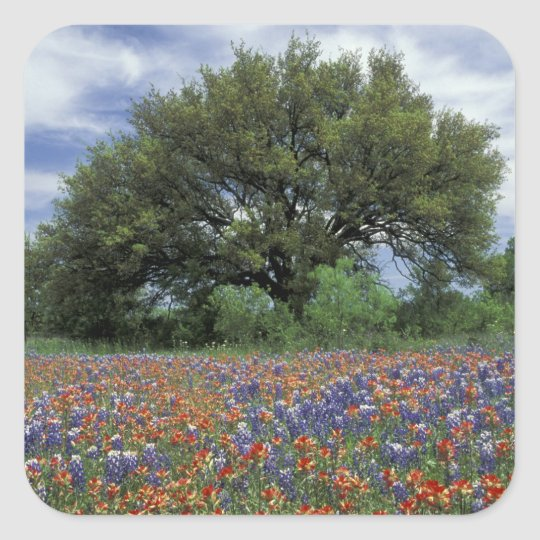 USA, Texas, Marble Falls Paintbrush and Square Sticker