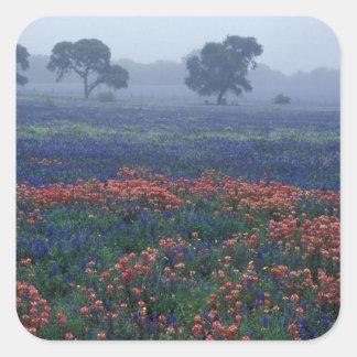 USA, Texas, near Lytle Fog, oaks, blue bonnets Square Sticker