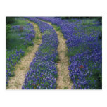 USA, Texas, near Marble Falls, Tracks in blue