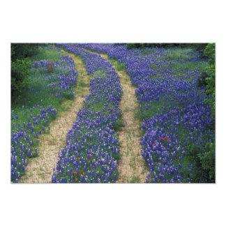 USA, Texas, near Marble Falls, Tracks in blue Photographic Print