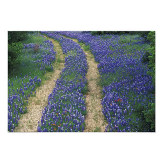 USA, Texas, near Marble Falls, Tracks in blue Photographic Print