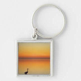 USA, Texas, Port Aransas, Great Blue Heron at Key Chain