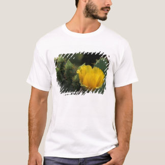 USA, Texas, Prickly Pear Cactus in bloom. T-Shirt