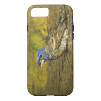 USA, Texas, Rio Grande Valley. Male blue iPhone 8/7 Case