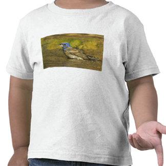 USA, Texas, Rio Grande Valley. Male blue Tee Shirts