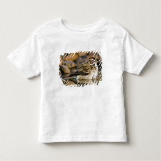 USA, Texas, Rio Grande Valley, McAllen. 2 T-shirts