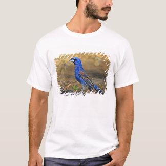 USA, Texas, Rio Grande Valley, McAllen. 4 T-Shirt