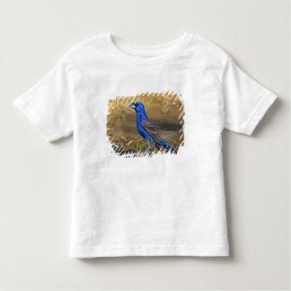 USA, Texas, Rio Grande Valley, McAllen. 4 Tee Shirts