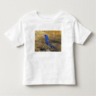 USA, Texas, Rio Grande Valley, McAllen. 4 Toddler T-Shirt