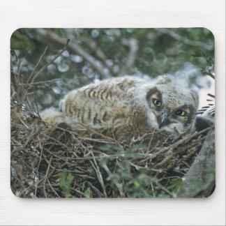 USA, Texas, Rio Grande Valley, McAllen. Close-up Mouse Pad
