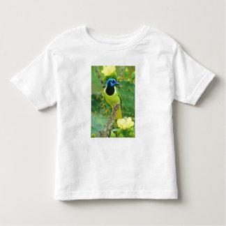 USA, Texas, Rio Grande Valley, McAllen. Green Shirt