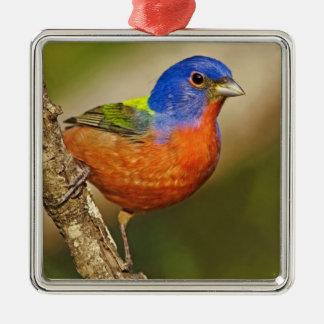 USA, Texas, Rio Grande Valley, McAllen. Male 2 Christmas Ornament
