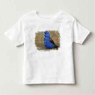 USA, Texas, Rio Grande Valley, McAllen. Male 3 Toddler T-Shirt