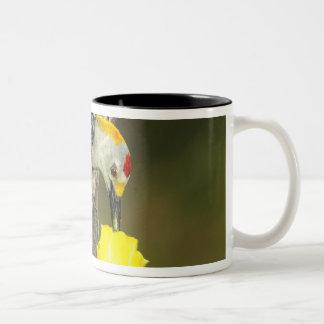 USA, Texas, Rio Grande Valley, McAllen. Male Mug