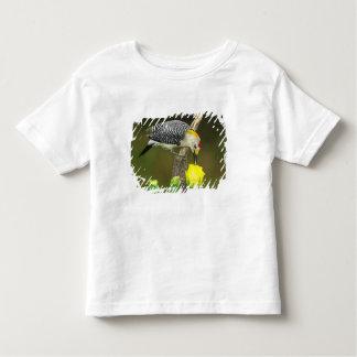 USA, Texas, Rio Grande Valley, McAllen. Male T-shirt