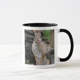 USA, Texas, Rio Grande Valley. Wild desert Mug