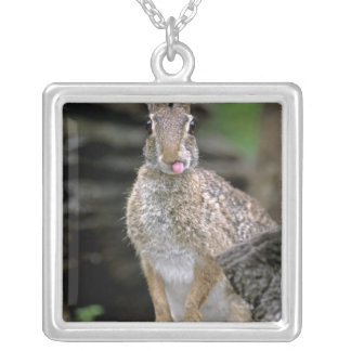 USA, Texas, Rio Grande Valley. Wild desert Silver Plated Necklace
