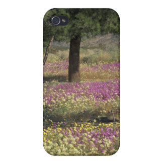 USA, Texas, Sand Verbena and Brown-eyed iPhone 4 Covers