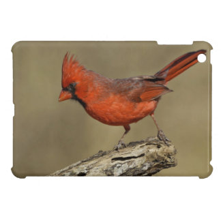 USA, Texas, Santa Clara Ranch. Northern Cardinal iPad Mini Case