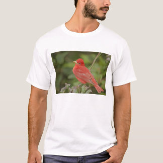USA, Texas, South Padre Island. Close-up of male T-Shirt