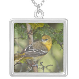 USA, Texas, South Padre Island. Portrait of 3 Silver Plated Necklace