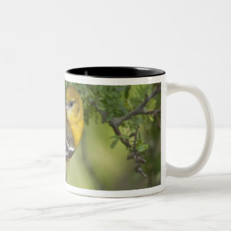USA, Texas, South Padre Island. Portrait of 3 Two-Tone Coffee Mug