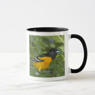 USA, Texas, South Padre Island. Portrait of Mug