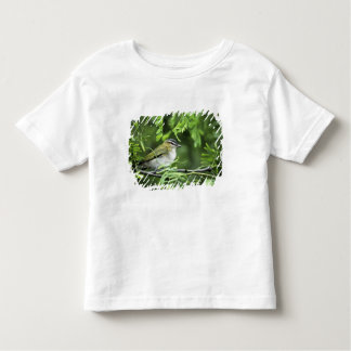 USA, Texas, South Padre Island. Wild male Toddler T-Shirt