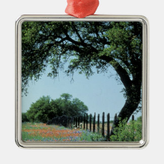 USA, Texas, Texas Hill Country Paintbrush and Christmas Ornament