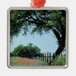 USA, Texas, Texas Hill Country Paintbrush and Ornaments
