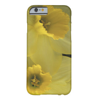 USA, Utah, Cache Valley Daffodils Barely There iPhone 6 Case