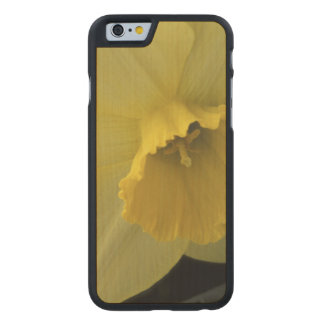 USA, Utah, Cache Valley Daffodils Carved® Maple iPhone 6 Case