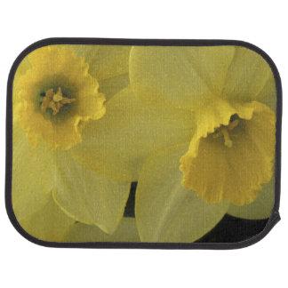 USA, Utah, Cache Valley Daffodils Floor Mat