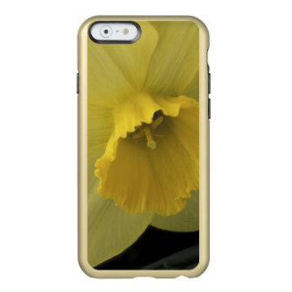 USA, Utah, Cache Valley Daffodils Incipio Feather® Shine iPhone 6 Case