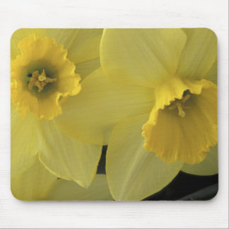 USA, Utah, Cache Valley Daffodils Mouse Pad